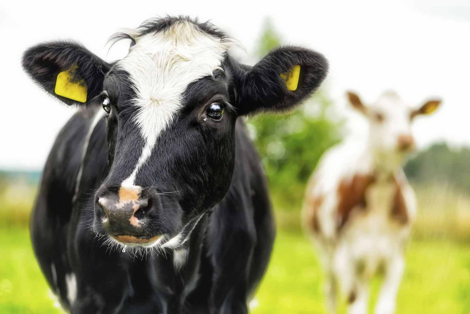 livestock-slide-bg1