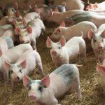 livestock-slide-bg2