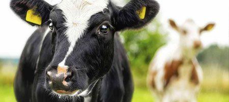 Livestock drinkers